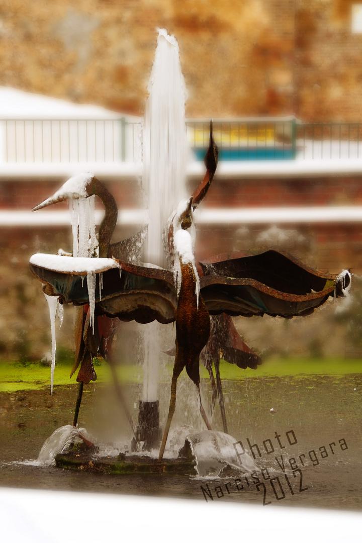 Aves congeladas