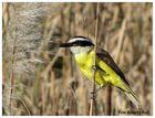 Aves de la reserva ecológica 2