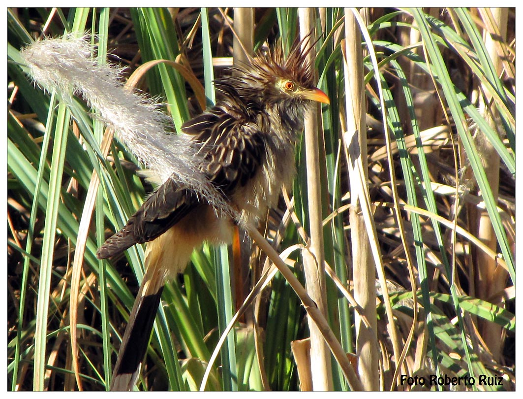 Aves de la reserva ecológica