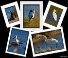 Aves de las marismas I