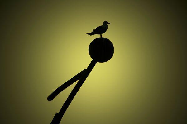 Aves parte de los monumentos
