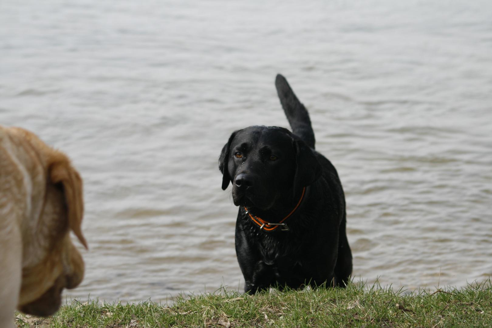 Avi..... komm wir gehen wieder schwimmen....