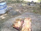 avispa carnivora