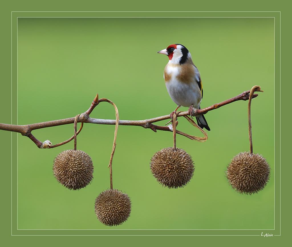 ''avoir les boules'' ! !