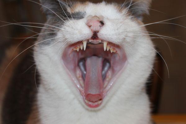 Avoir un chat dans la gorge