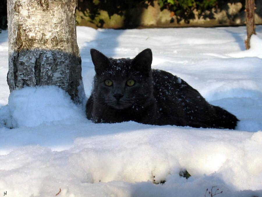 Ax e la neve