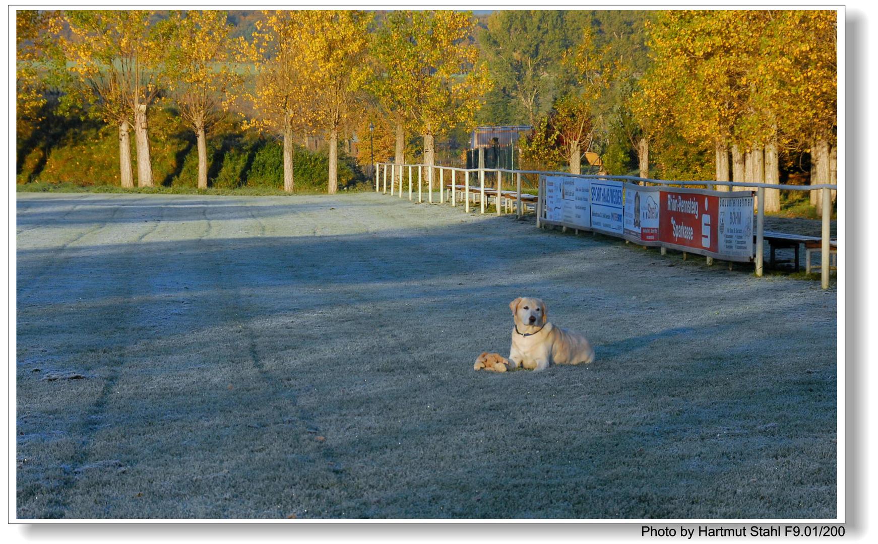 Ayer de la mañana, Bonnie está esperándome en el campo de deportes (Bonnie wartet auf mich)