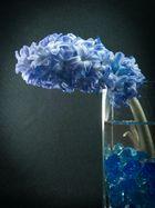 Azucena Azul