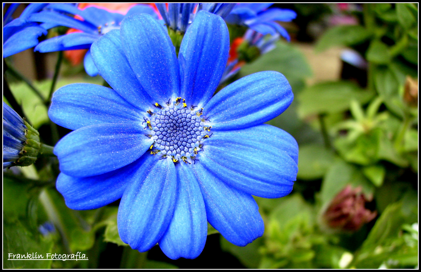 Azul.