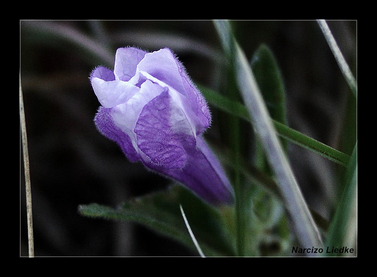 Azul IX - para Nuria Zortém