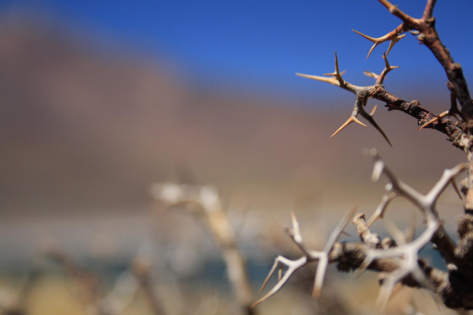 Azul y espinos