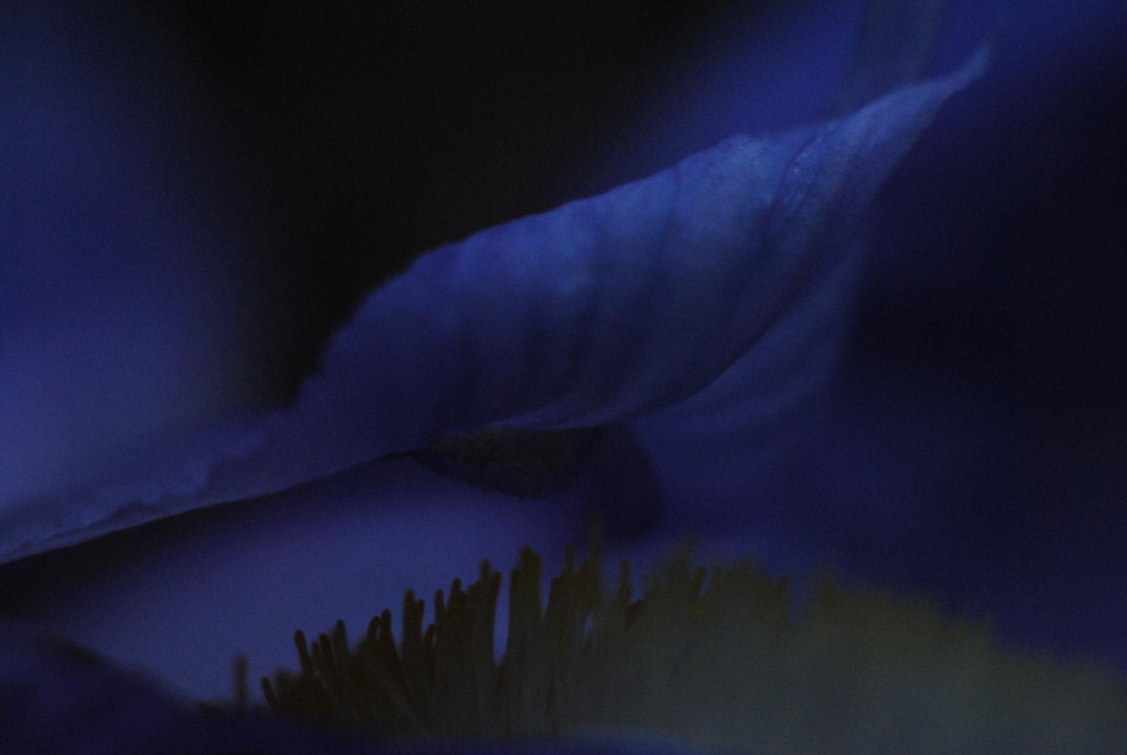 Azulinidad