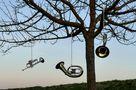 Der Trompetenbaum von Jakob F.