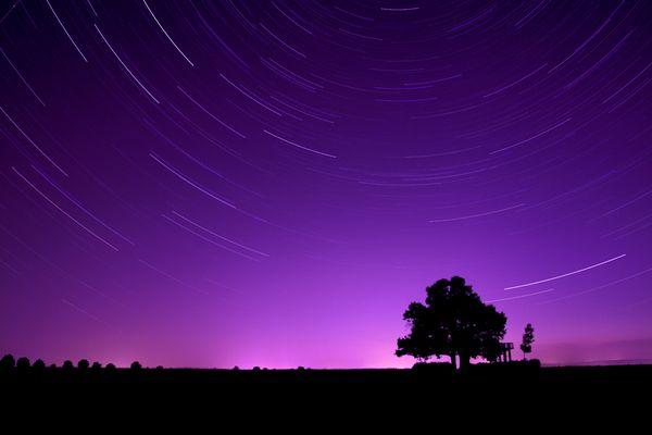 Babisnauer Pappel bei Nacht