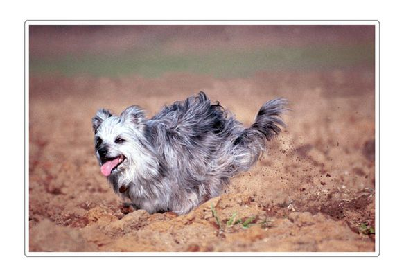 Babusch - Freude am Laufen
