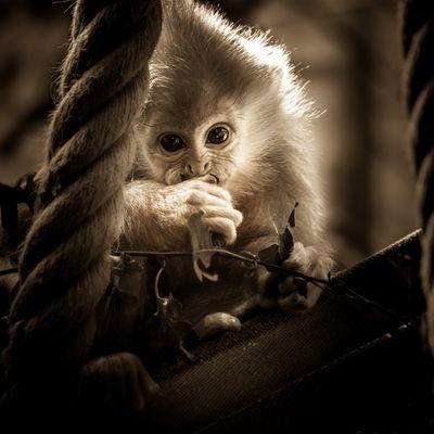 Baby Affen Portrait