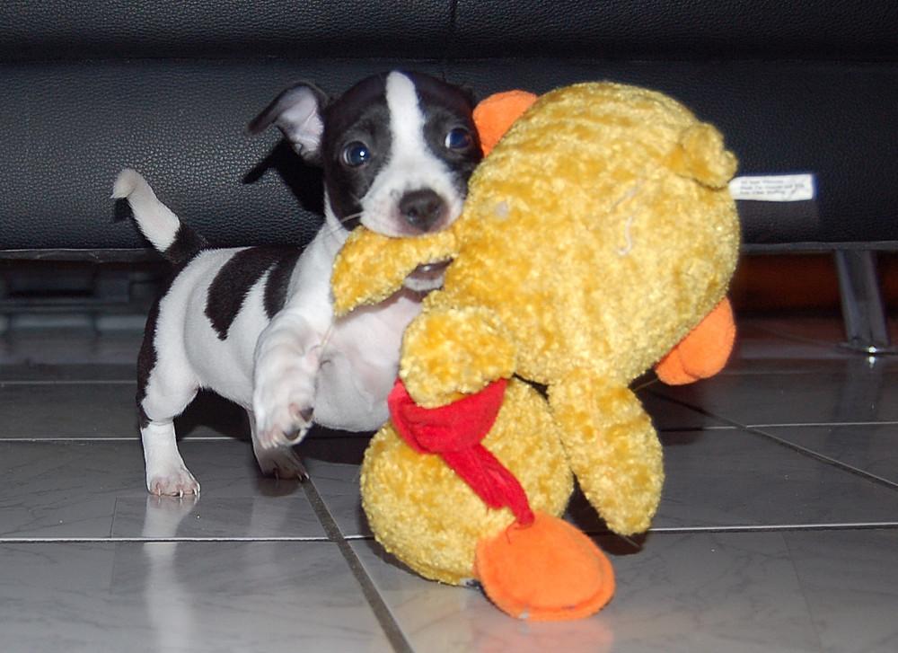 Baby Baily mit seiner Lieblingsente!