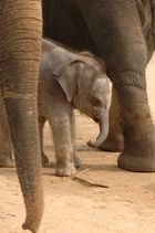 Baby-Boom im Zoo Hannover