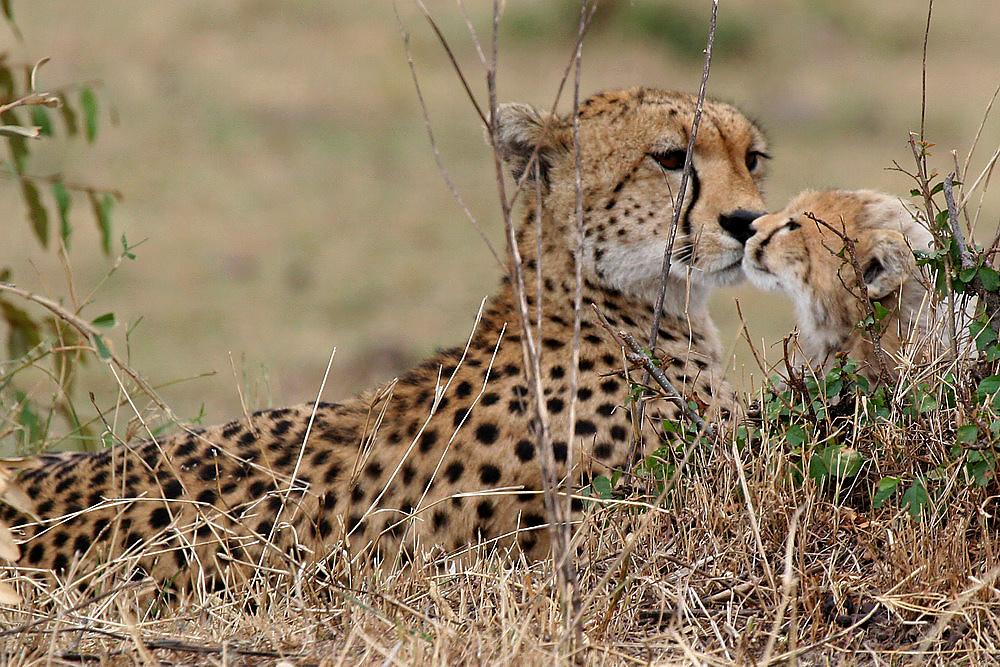 Baby Cheetah #2