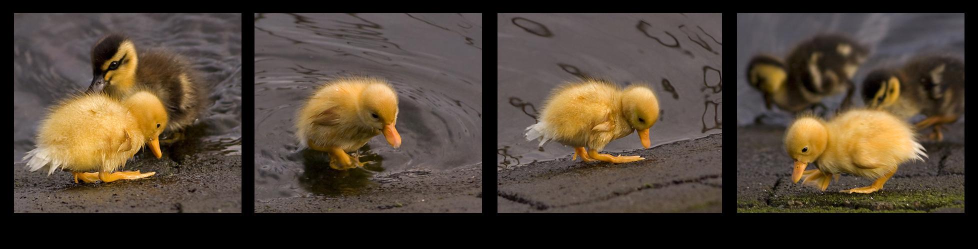 ~ Baby Donald ~