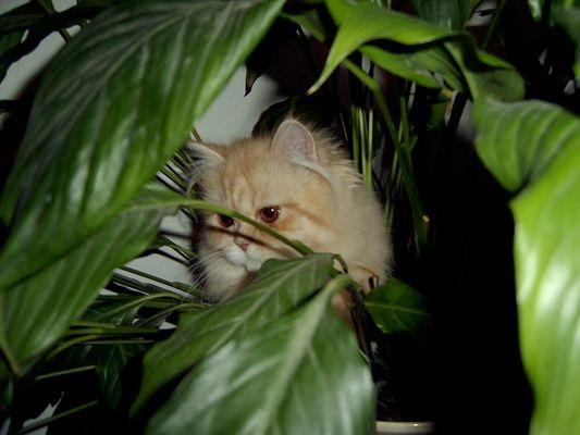 Baby im Dschungel 1