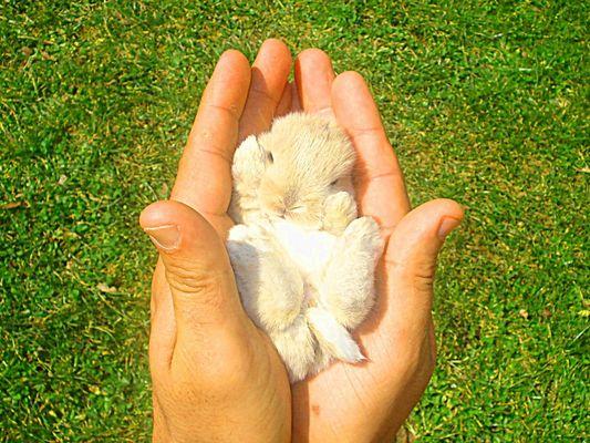 Baby jack rabbit