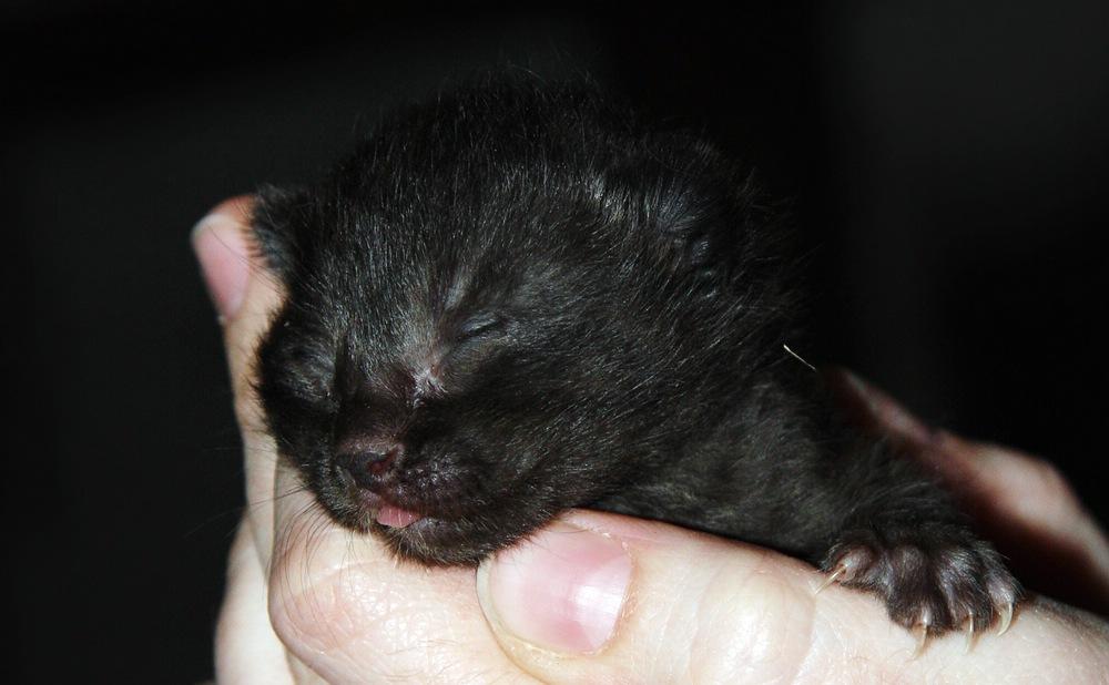 Baby - Kätzchen