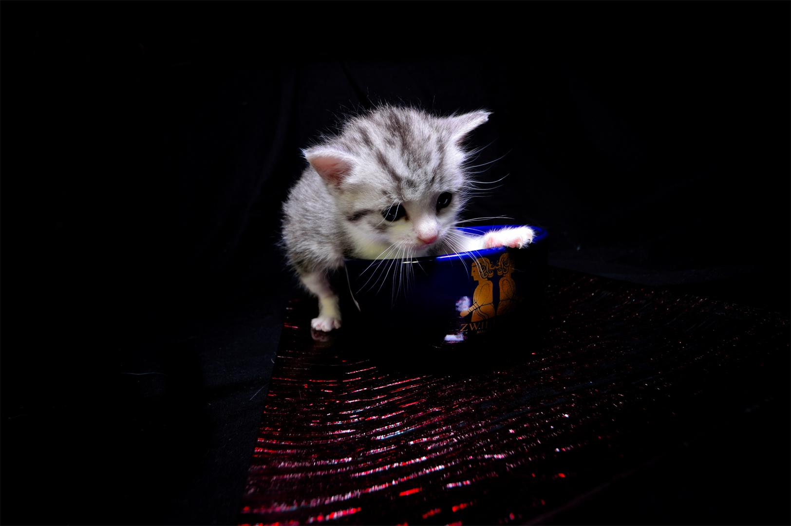 Baby Katze 3
