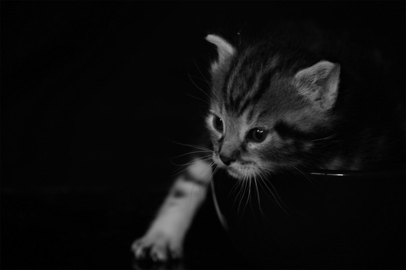 Baby Katze 4
