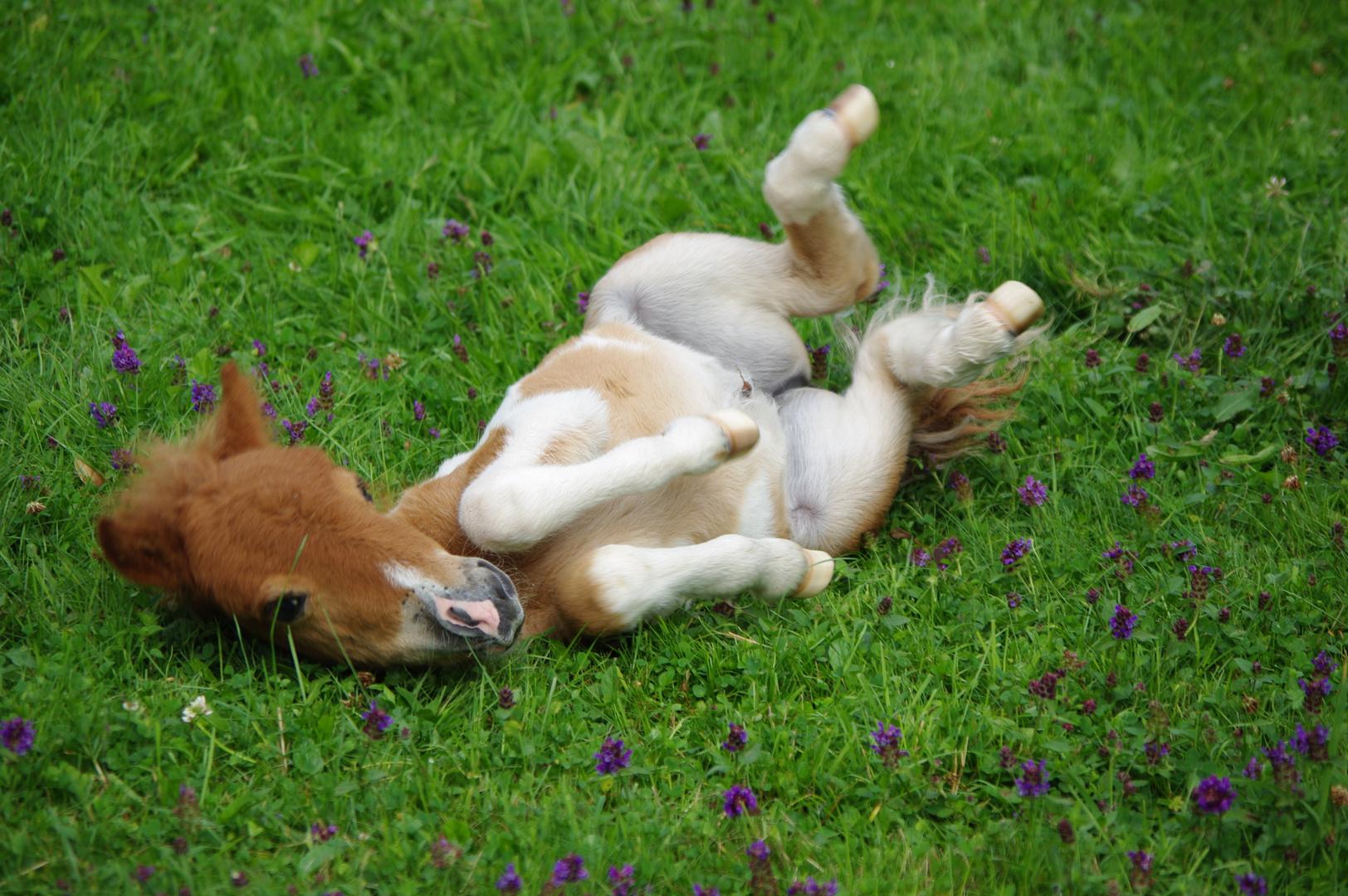 Baby Pony 3 Wochen alt