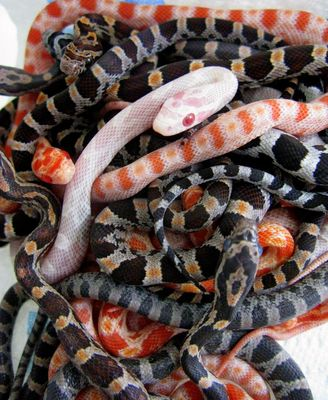 Baby Snakes