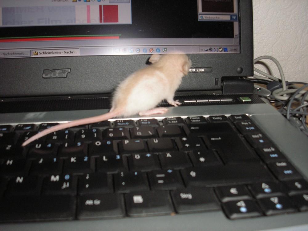 Baby-Technik-Freak online