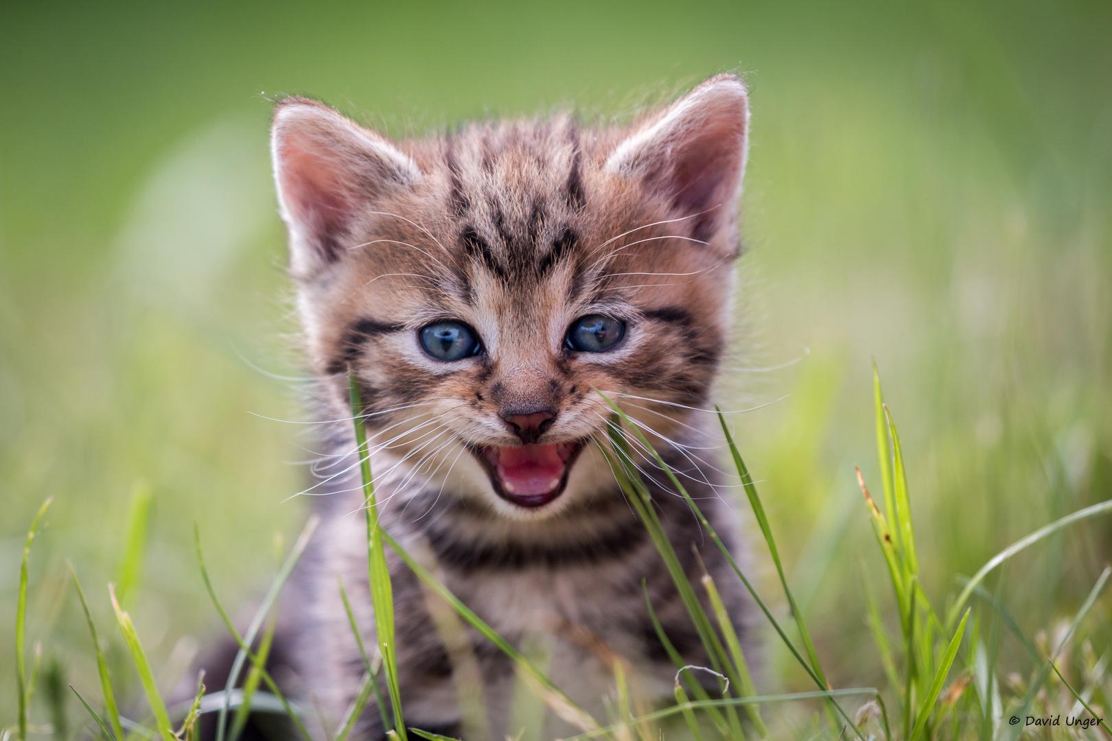 Babykatze Foto & Bild | gras, natur, katze Bilder auf