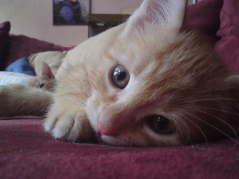 Babykatze vom 2. Wurf. Sam.