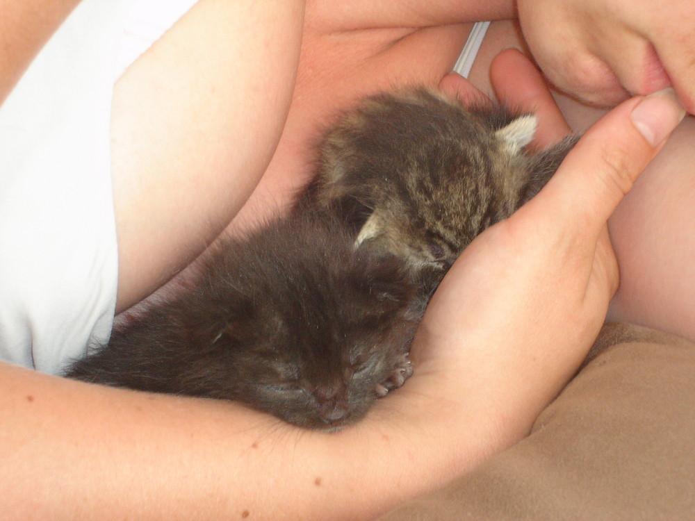 Babykitten Kit+Cat mit Pflegemama