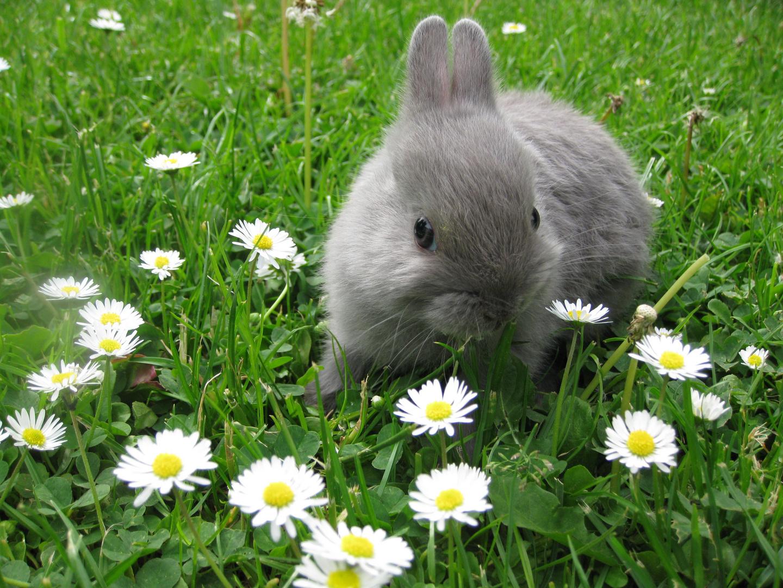 Babyzierhase, Babyzierhasen, Kaninchen, Natur, Babys, Baby