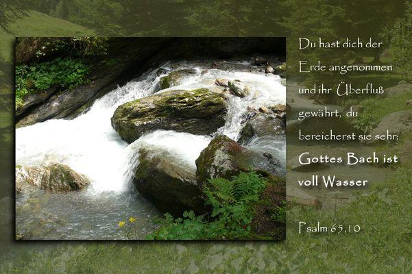 Bach in der Schweiz