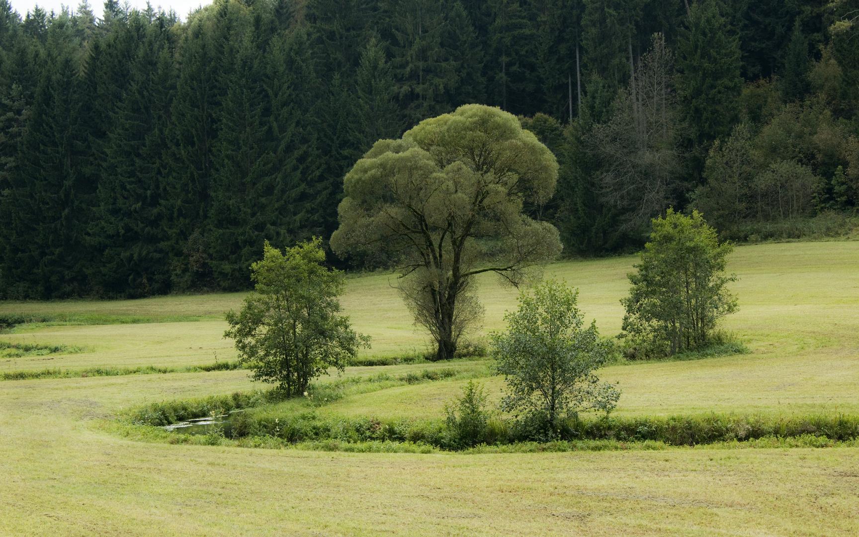 Bach mit Baum-Arrangement