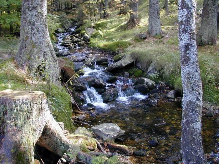 Bachlauf im Bayrischem Wald