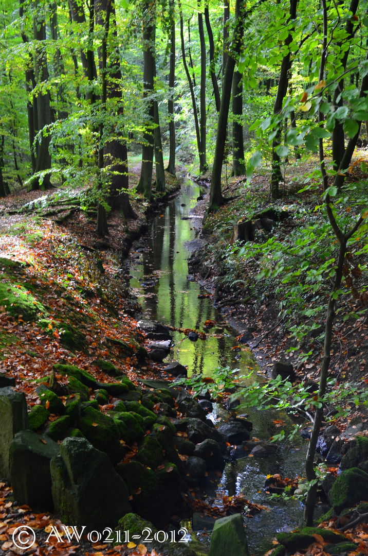 Bachlauf im Berkgpark Kassel