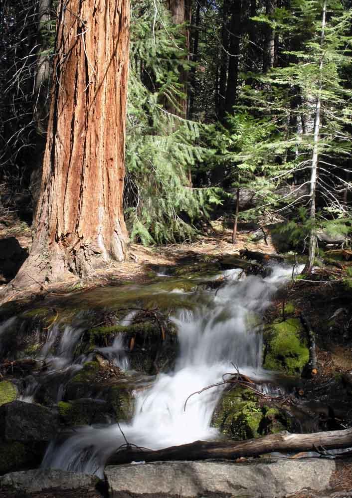 Bachlauf im Yosemite