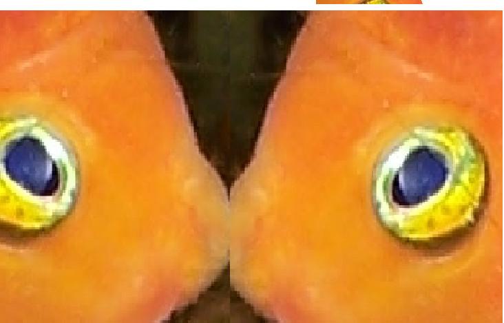 bacino tra pesci