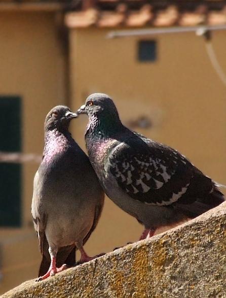 Bacio.....