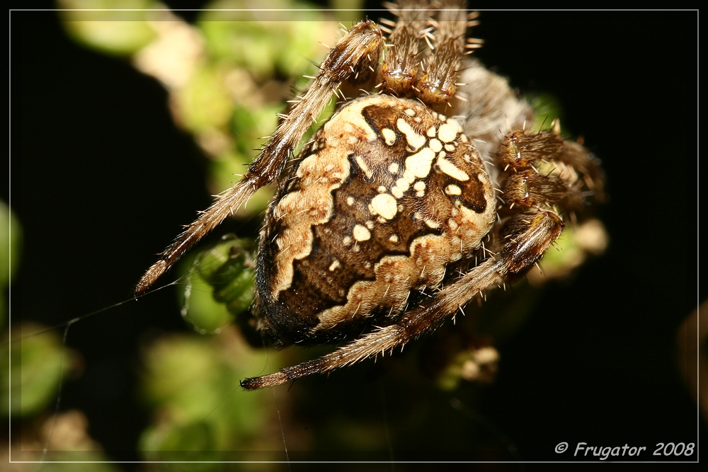Back of a spider...