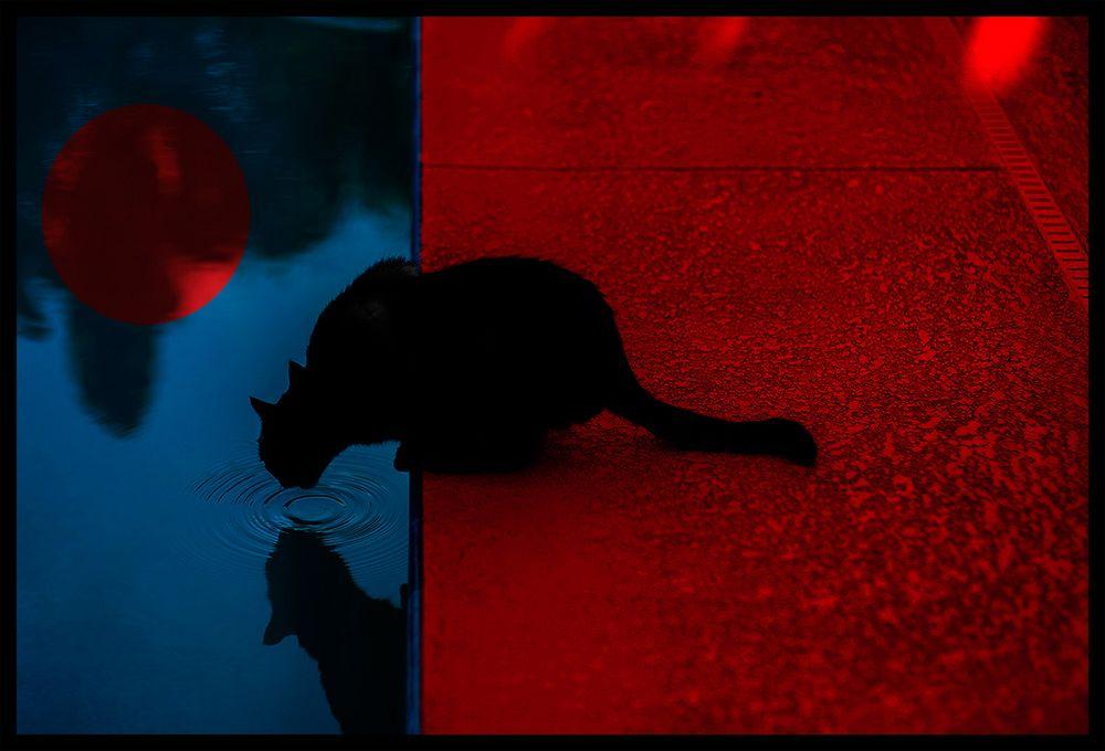 backyard black panther blues