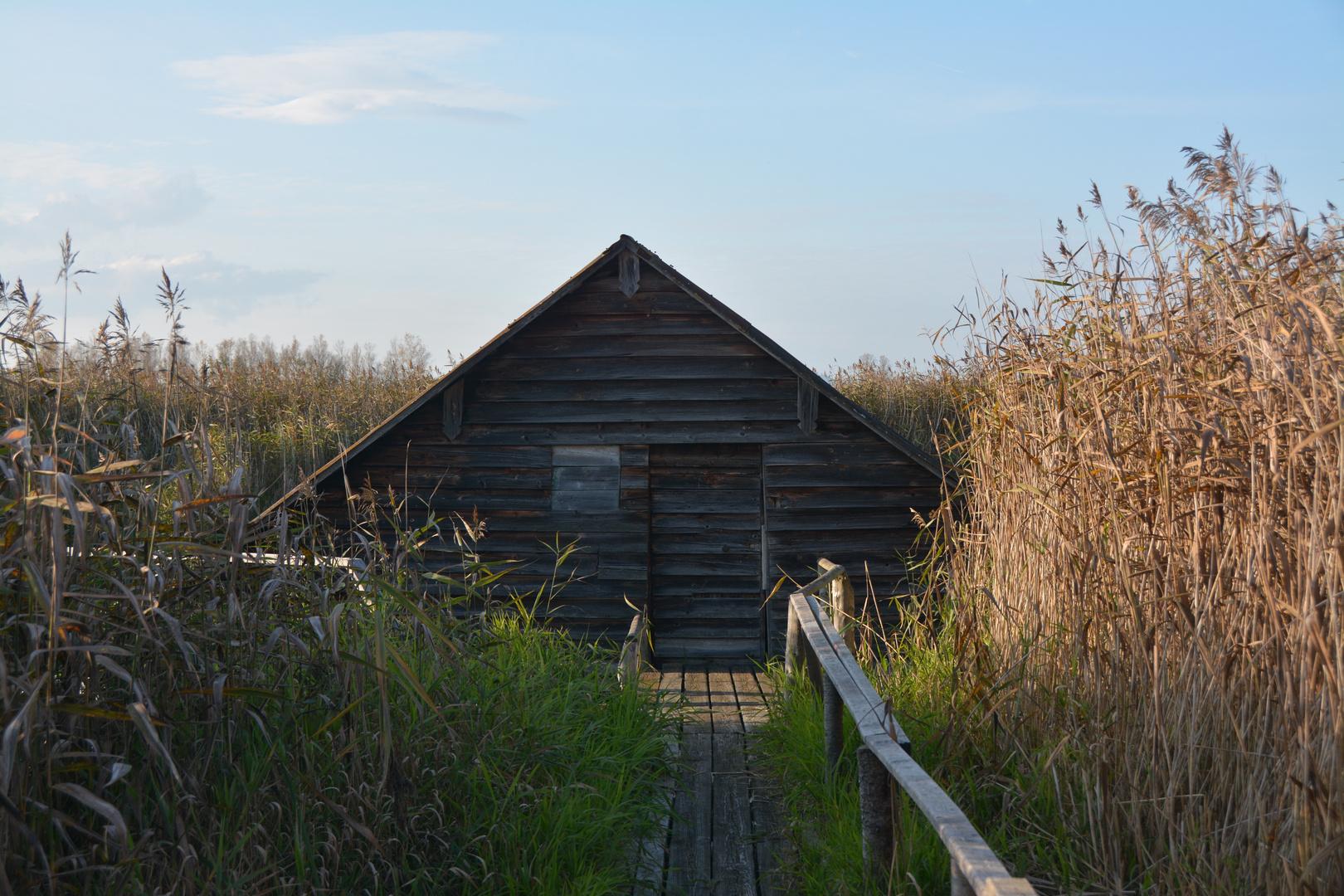 Bad Buchau Die Hütte im See