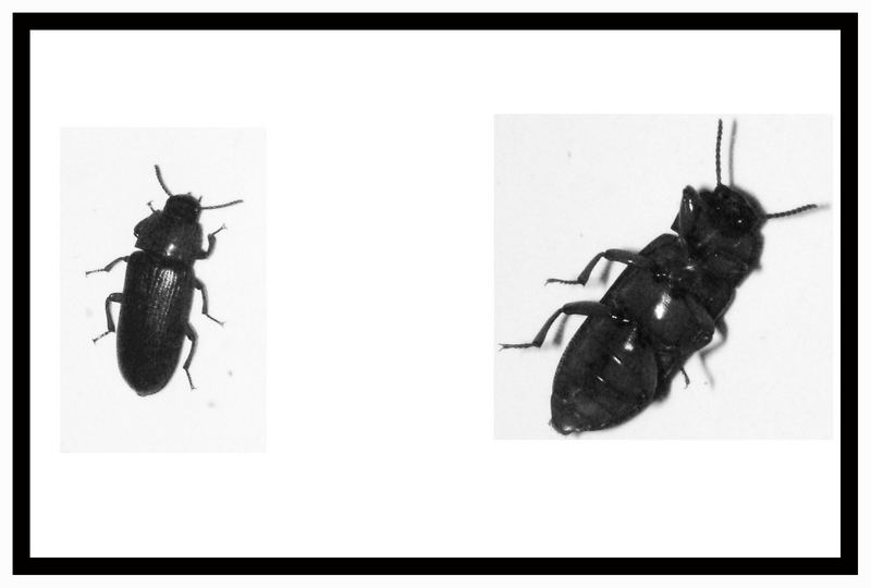 Bad Bug