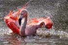 Bad im Wasser