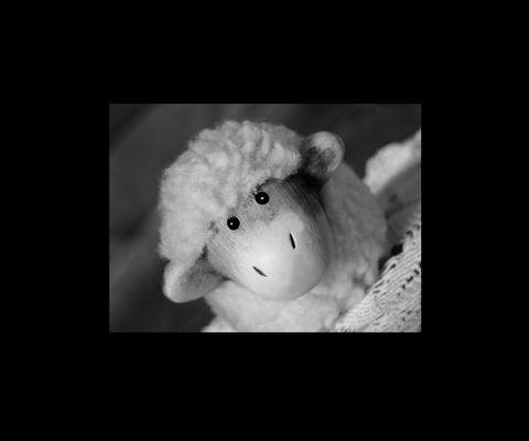 Bad Sheep *määh*