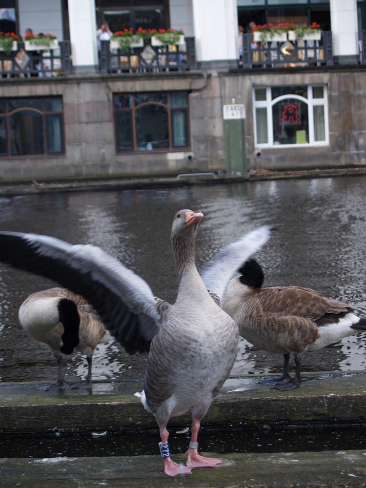 Badegäste in Hamburg